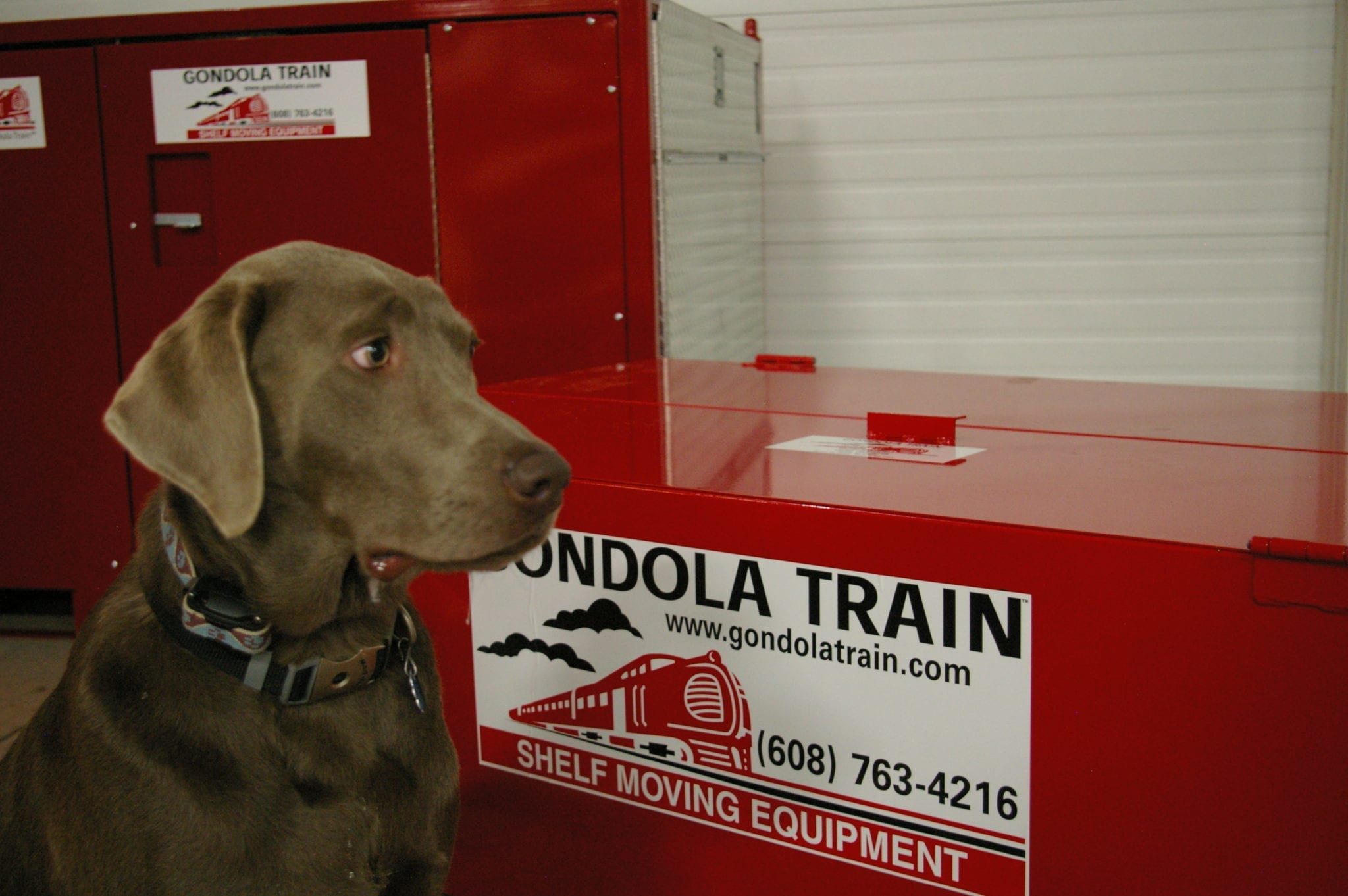 A chocolate lab sitting in front of a red Gondola Train storage box.